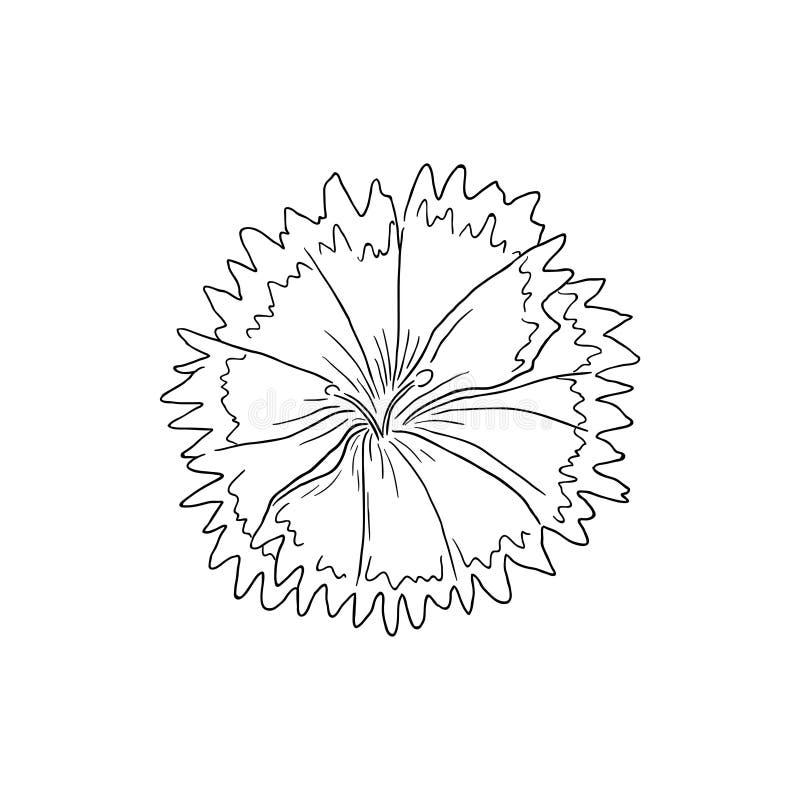 Svart linje Art Dianthus Flower Pinks vektor illustrationer