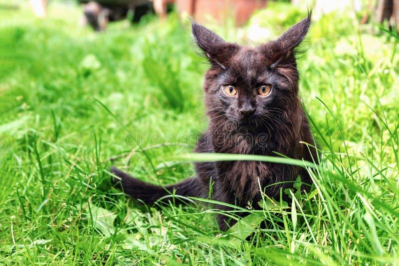 Svart liten katt som sitter på gröngräs arkivbild