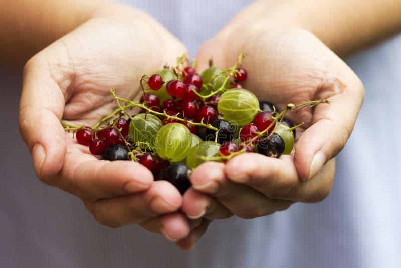 Svart och röd vinbär för krusbär, hallon - bär i gömma i handflatan av kvinnor royaltyfria bilder