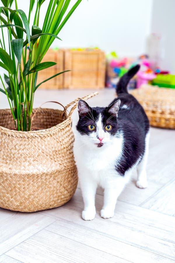 Svart och vit katt är en grön växt i en korgkorg Lodrätt foto royaltyfria bilder