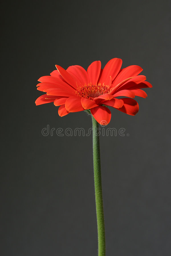svart orange royaltyfria foton