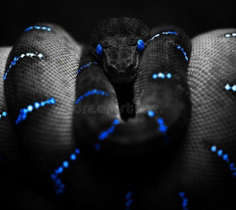 svart orm royaltyfri bild