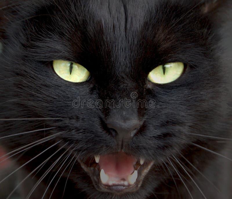 svart panter royaltyfria bilder
