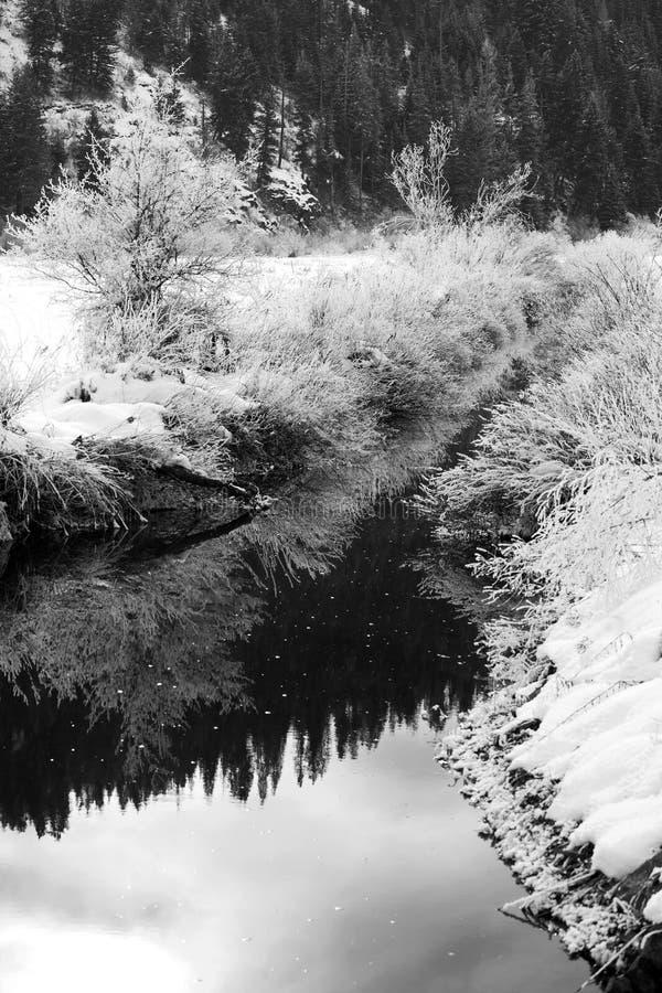 svart scenisk vit vinter royaltyfria bilder