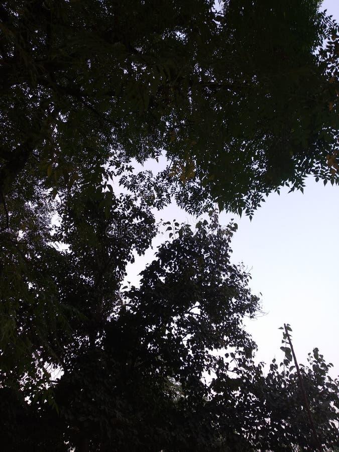 Svart skugga av ett träd royaltyfria foton
