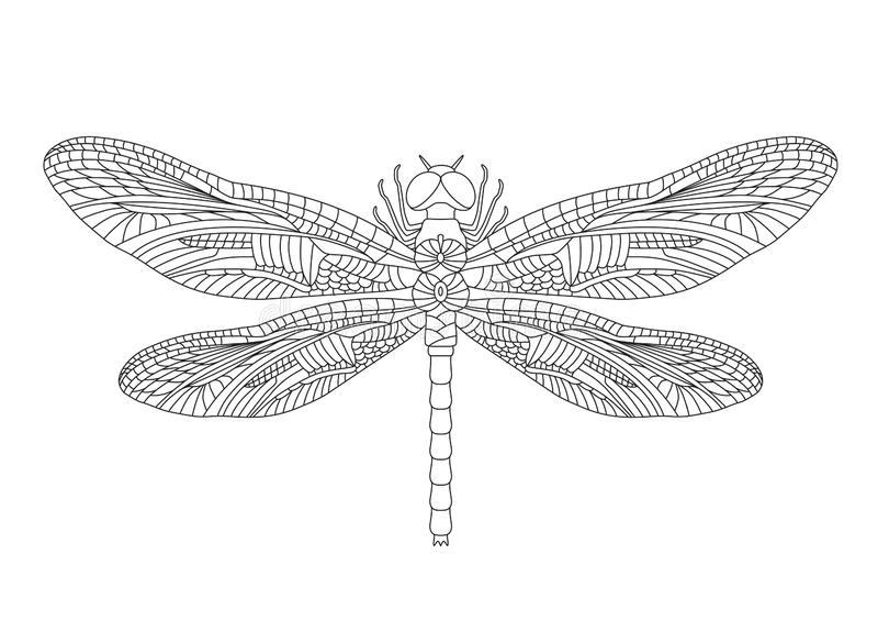 Svart slända på isolerad vit bakgrund vektor vektor illustrationer