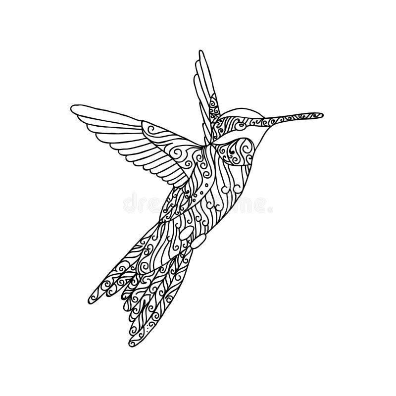 Svart snör åt handen dragit klotter av colibrien vektor illustrationer