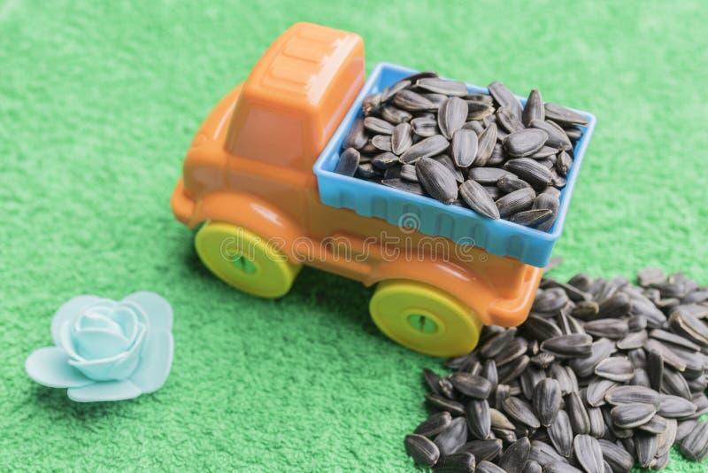Svart solrosfrö ligger i baksidan av en bil för leksak för barn` s och travas tillsammans med på en grön bakgrund royaltyfria foton