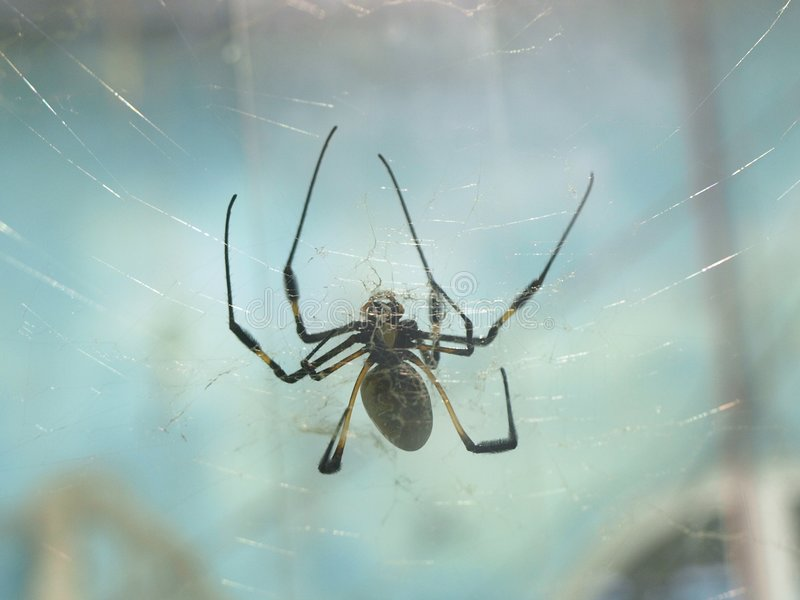 svart spindel arkivfoto