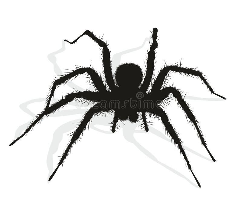Svart spindelkontur stock illustrationer