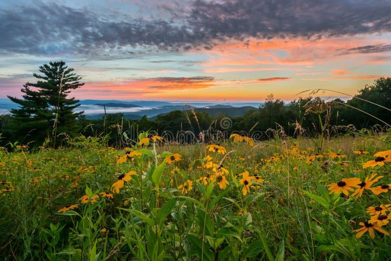 Svart synade Susan Flowers på solnedgången arkivfoton