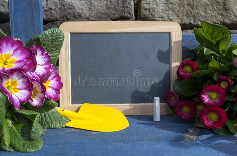 Svart tavla med växter och trädgårdhjälpmedel på blått trä arkivbild