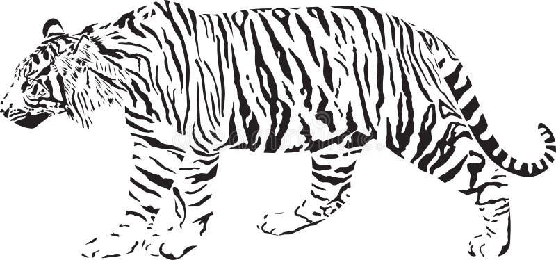 svart tigerwhite royaltyfri illustrationer