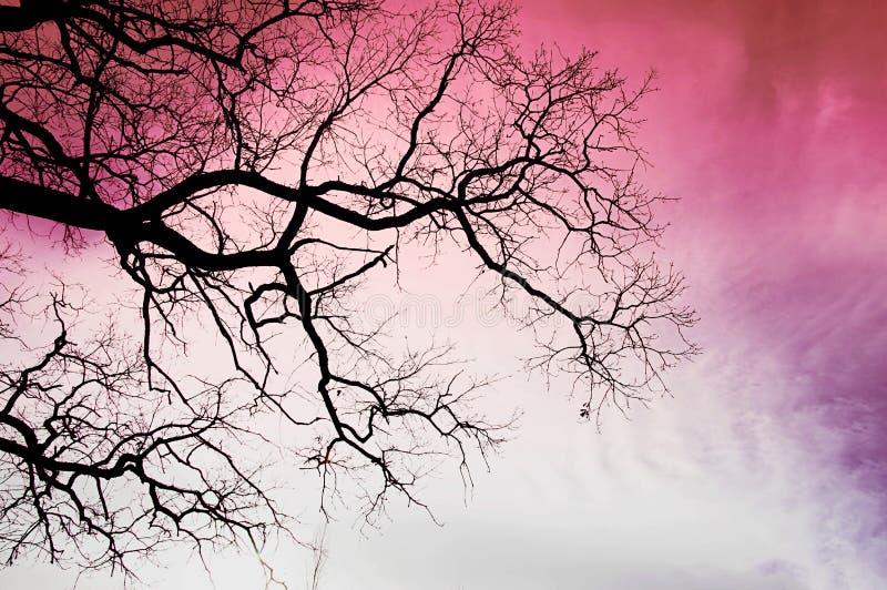 Svart träd på en rosa himmelbakgrund royaltyfri foto