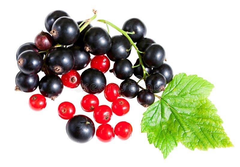 Svart vinbär för bär och röd vinbär med gräsplansidaisolaten fotografering för bildbyråer