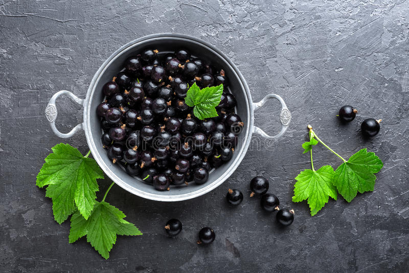 Svart vinbärbär med sidor, svart vinbär royaltyfria bilder