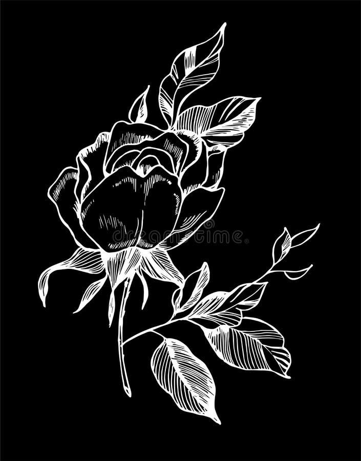 Svart vitrosillustration Bild av en växt i stilen av en tatuering Krita p? en blackboard royaltyfri illustrationer