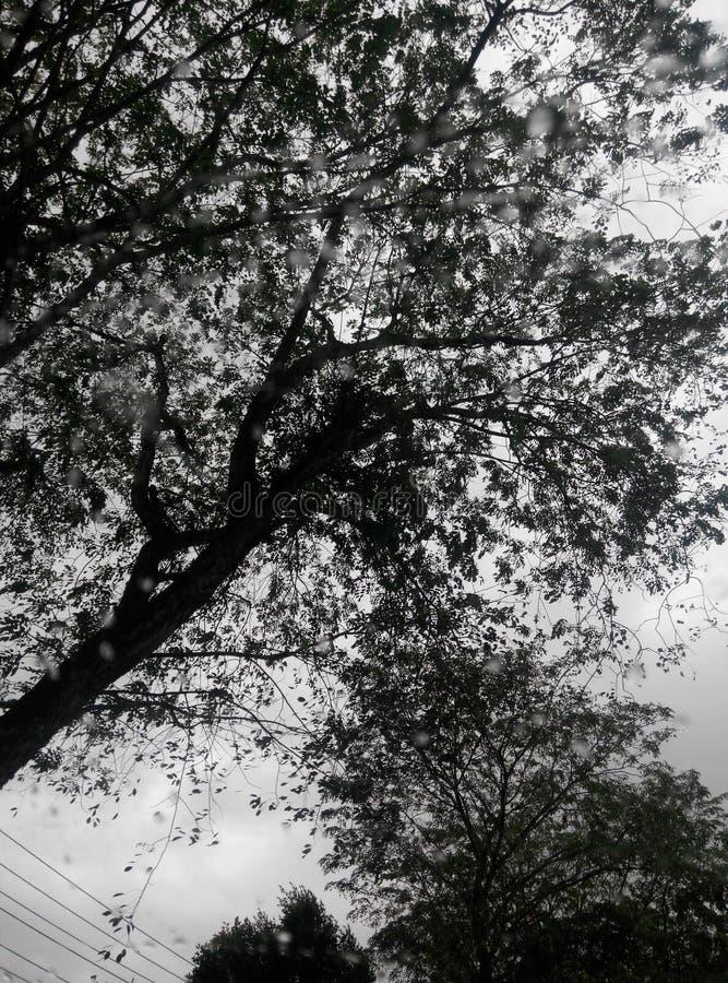 svart vitt utomhus- royaltyfri foto