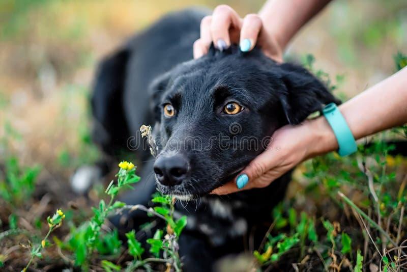 Svart vuxen hund royaltyfria foton