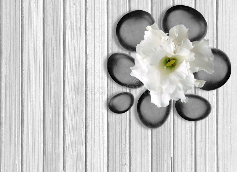Svarta brunnsortstenar med blomman på vit träbakgrund royaltyfria bilder