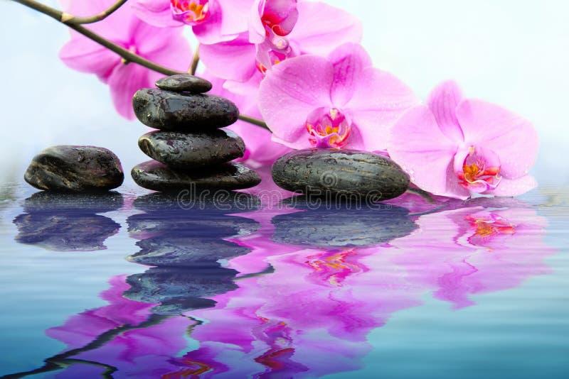 Svarta brunnsortstenar och rosa orkidér blommar med reflexion i vatten royaltyfri bild