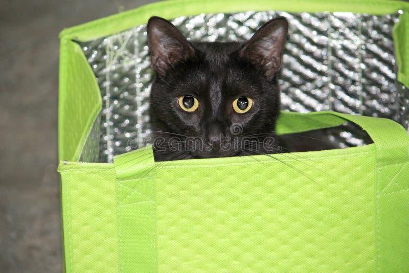 Svarta Cat Peeking Out av en påse för shopping för limefruktgräsplan arkivbild