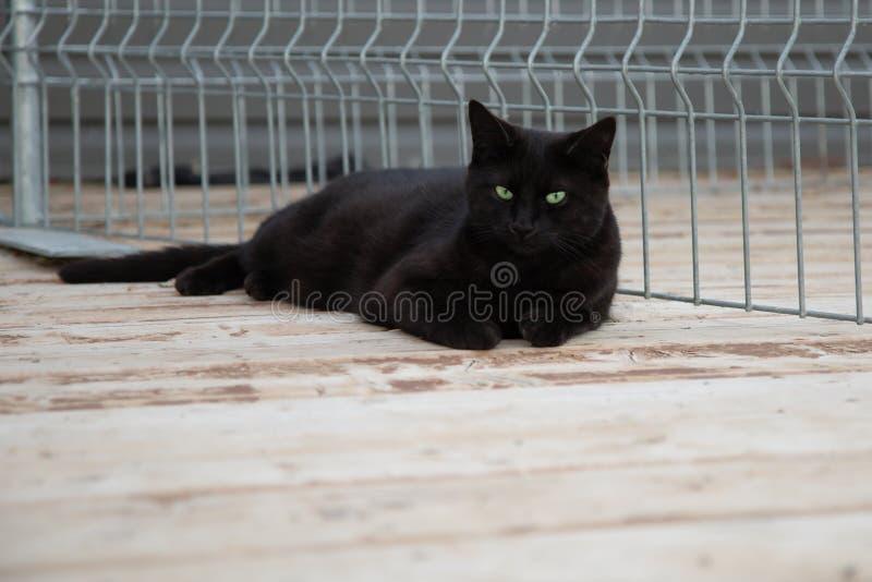 Svarta Cat Portrait Outdoors i sommaren royaltyfri fotografi