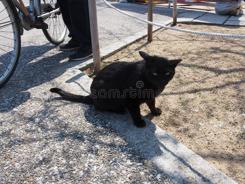 Svarta Cat Starring Japan Travel royaltyfria bilder