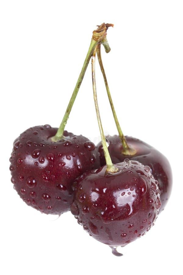 svarta Cherry royaltyfria bilder