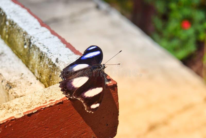 Svarta fjärilar flyga iväg vinden och solskenet arkivfoto
