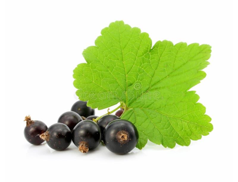 svarta isolerade filialvinbärfrukter royaltyfri bild