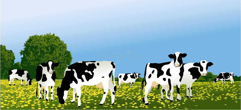 svarta kor brukar uk-waltshirewhite vektor illustrationer