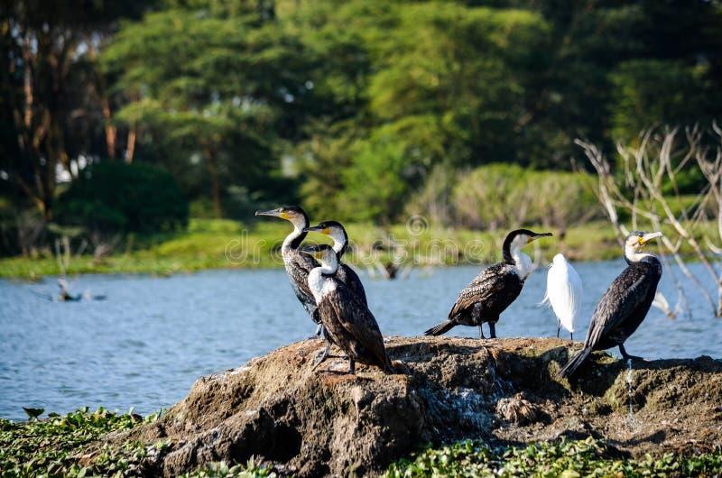 Svarta och vita fåglar Near Body of Water vid Daytime royaltyfri bild