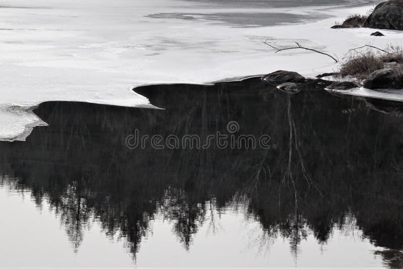Svarta och vita reflektioner i vintern av höga barrträd arkivbild