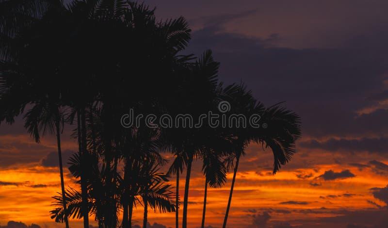 Svarta palmträdkonturer arkivfoto