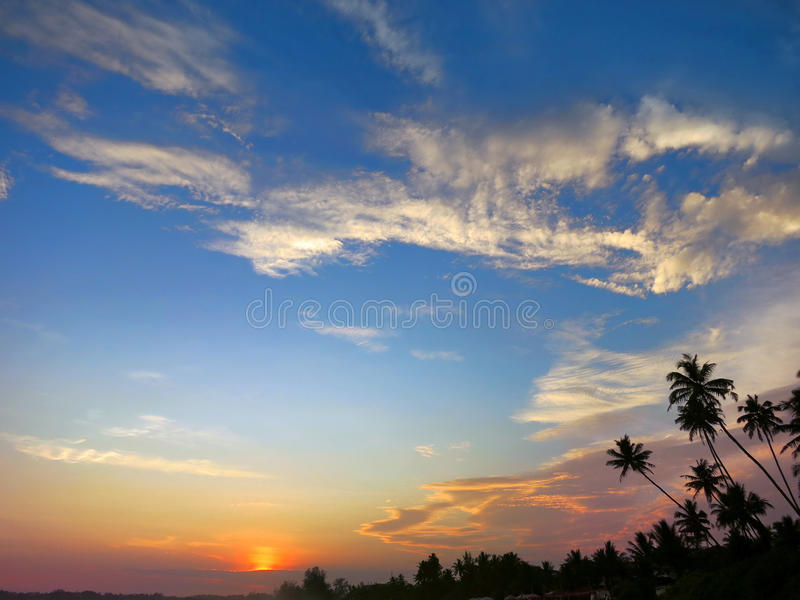 Svarta palmträdkonturer på solnedgånghimmelbakgrund, Kamburugamuwa, Sri Lanka arkivbilder