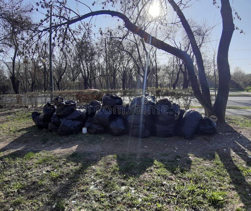 Svarta plast- avskrädepåsar i parkera, vårlokalvård Sidor och avskräde i påsarna royaltyfria bilder