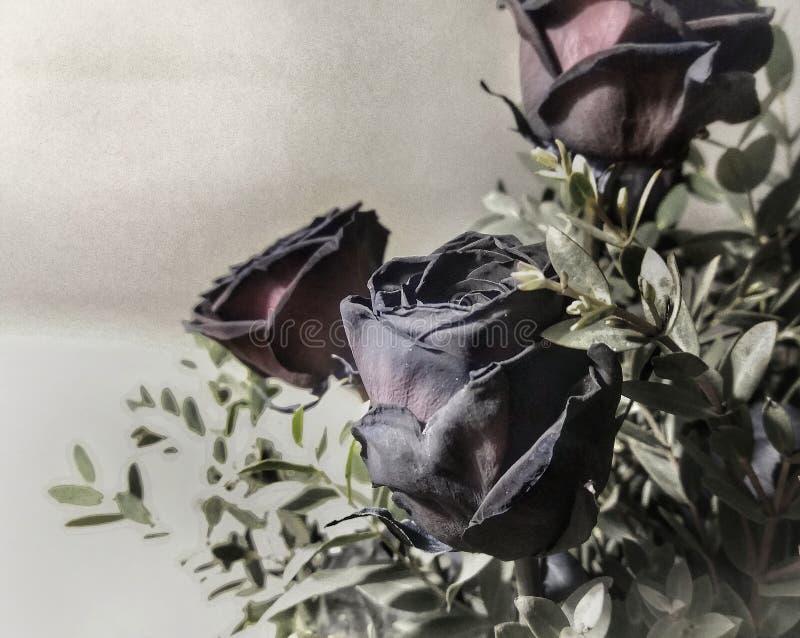 svarta ro royaltyfri fotografi