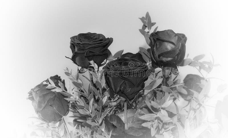 Svarta rosor i bukett royaltyfri foto