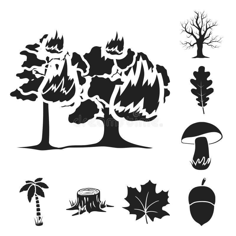 Svarta symboler för skog och för natur i uppsättningsamlingen för design Illustration för rengöringsduk för materiel för symbol f stock illustrationer