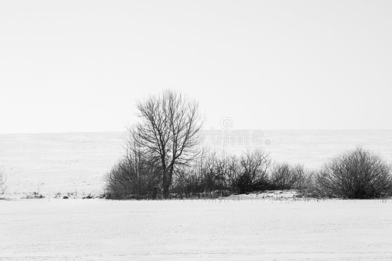 Svarta träd på dentäckte slätten nära river_en royaltyfria foton