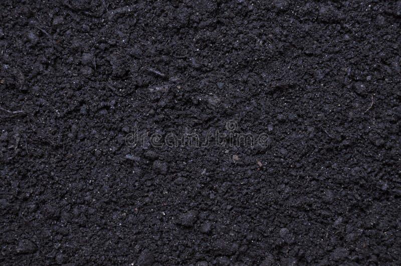 svarta växter smutsar arkivfoto