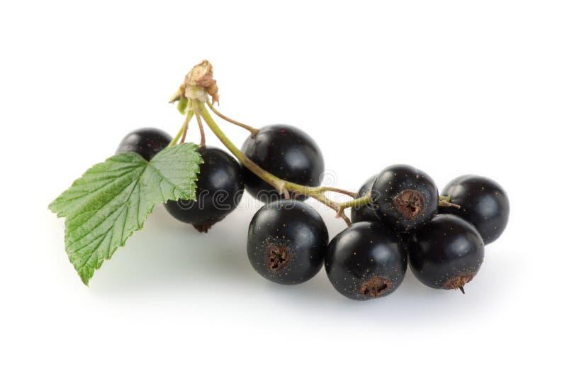 Svarta vinbär royaltyfria foton