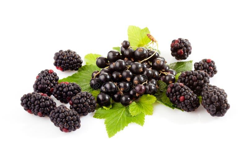 Svarta vinbär och björnbär, sidor royaltyfri bild