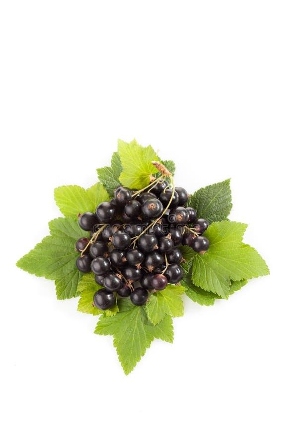 Svarta vinbär, vit bakgrund royaltyfri fotografi