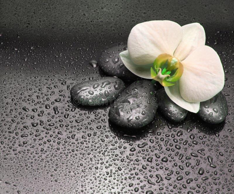 Svartstenar och orkidéblomma arkivfoto