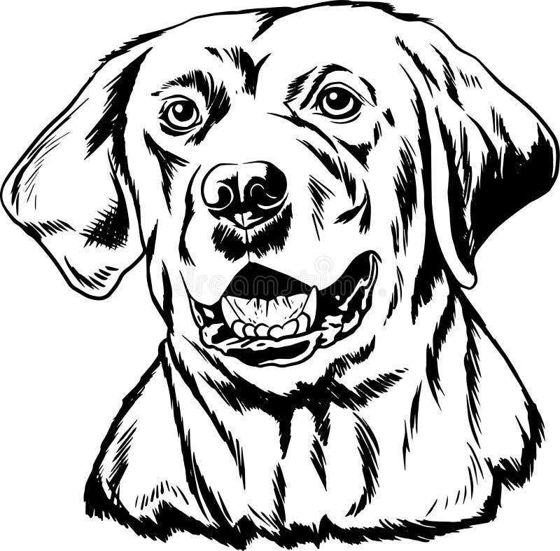 Svartvit översikt för labrador arkivfoto
