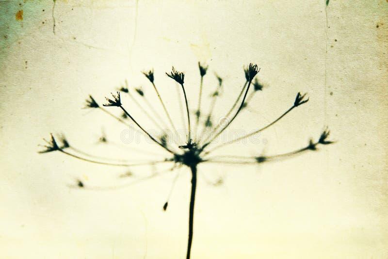 Svartvit abstrakt blommabakgrund arkivfoto