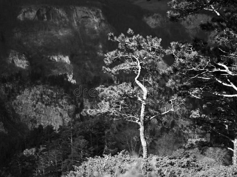 Svartvit bakgrund för bergträdlandskap fotografering för bildbyråer