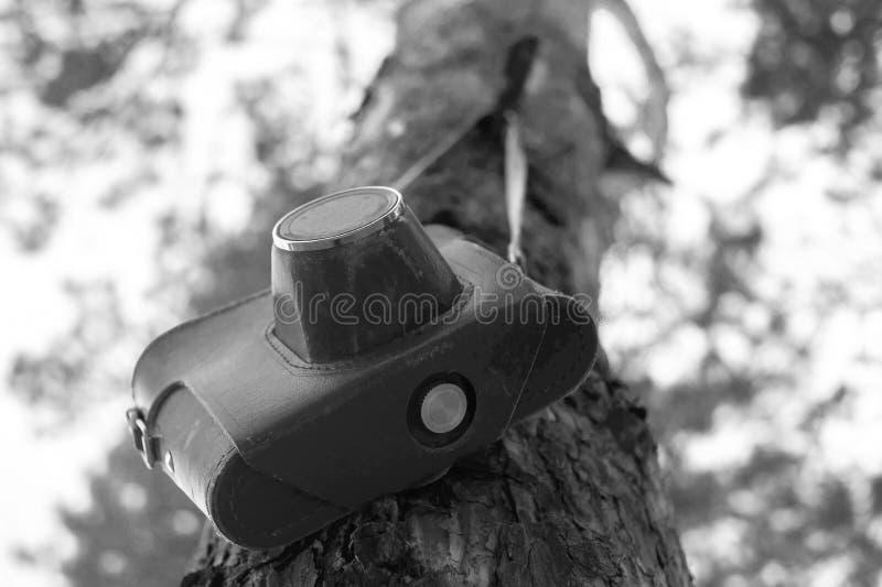 Svartvit bild av en filmkamera som hänger från ett träd i ett läderfall royaltyfria bilder